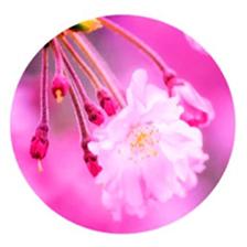Blossom Health and Beauty logo